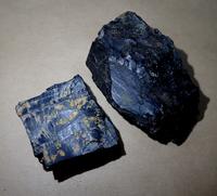 亜炭と琥珀 - 虫と