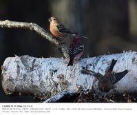 埼玉県県民の森 2020.1.9(2) - 鳥撮り遊び