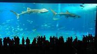 美ら海水族館 - 南の島の飛行機日記