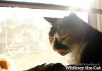 Whitneyの旅立ち - Kyoko's Backyard ~アメリカで田舎暮らし~