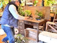 新春盆栽展はじまりました - Kitowaの日々