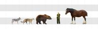 北米肉食獣vsウマ - アニマル情報202X