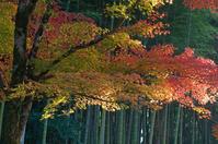 京都も好き - バリ島大好き