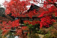 紅葉が彩る滋賀2019善水寺の彩り - 花景色-K.W.C. PhotoBlog