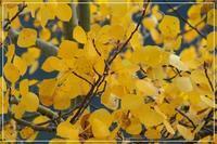 ロッキーの黄葉 - カナディアンロッキーで暮らす