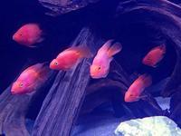 春のアクアパーク品川~季節限定水槽2f - 続々・動物園ありマス。