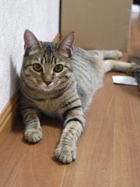 猫のお留守番 くりんちゃん編。 - ゆきねこ猫家族