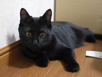 猫のお留守番 キキちゃん編。 - ゆきねこ猫家族