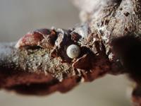 定番の種は今年も健在 - 蝶超天国