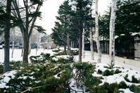 例年なら雪の下の草木たち - 照片画廊