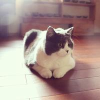 お休みのお知らせ - 朝虹窯ギャラリー(余宮隆)