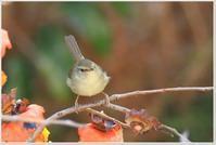 今日の野鳥たち - ハチミツの海を渡る風の音
