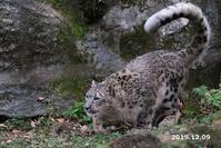 フク通信61(12月まとめ) - 動物園に嵌り中2