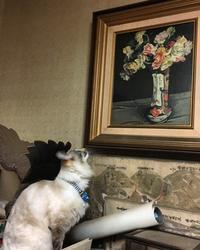 来客にオープンな猫、警戒する猫 - Libertydoll