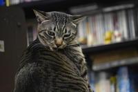マタタビ癖の悪い猫 - 駄猫と本の部屋 ぶらん亭