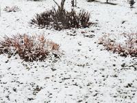 この冬、初めての積雪は1センチ? - 大朝=水のふる里から