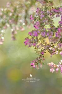 春の足音 - お花びより