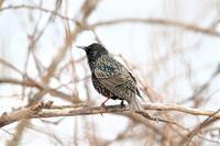 綺麗なハート - 綺麗な野鳥たち
