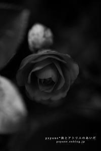 Flower Photograph #17 - psyuxe*旅とアトリエのあいだ