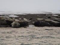 2019.12.14 抜海のアザラシ - ジムニーとピカソ(カプチーノ、A4とスカルペル)で旅に出よう