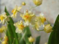窓辺で咲いたお花たち - キミティのお花とギター