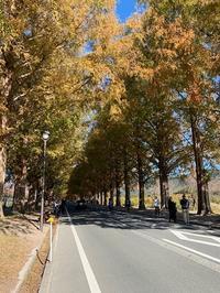 メタセコイヤ並木 - 京都ビジネス学院 舞鶴校