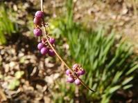 冬の紫… - 侘助つれづれ