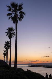 新春初撮り - 江の島 #30 - - 夢幻泡影