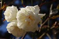 敷島公園でみつけた花 (2020/1/13撮影) - toshiさんのお気楽ブログ
