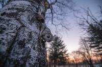 第67回ニッコールフォトコンテスト・ネイチャー部門で推選を頂きました。 - 動物写真家 佐藤 圭のBLOG/北海道の自然と野生動物