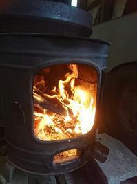 今年の冬は暖かいですが - 山脇農園ブログ
