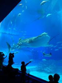 年末沖縄旅行記(2) 美ら海水族館(1) - ご無沙汰写真館