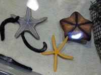 年末沖縄旅行記(3) 美ら海水族館(2) - ご無沙汰写真館