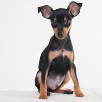 新しい家族! - いとしい犬たちのフォトブログ