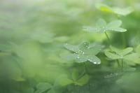 雨上がりの庭で - ecocoro日和