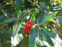 アオキ青木 - 里山の四季