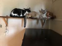 猫に占領される - 糸巻きパレットガーデン