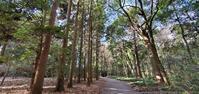 西那須野を行く乃木神社の樹林@栃木県 - 963-7837
