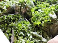 【 50度洗いと、鮮度を保つレタスのちぎり方。(静岡クッキングアンバサダー)】 - スパイスと薬膳と。