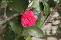 冬の花 - 陽だまりの詩