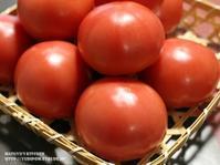 【保存版!静岡産トマトのお話 とトマトの追熟と冷凍保存、トマトレシピリンク色々。(静岡クッキングアンバサダー)】 - スパイスと薬膳と。