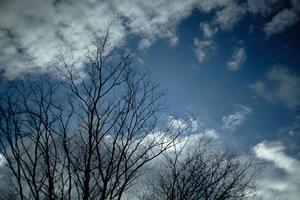 「冬」 - 気ままに写生活