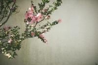 品川宿 - IN MY LIFE Photograph