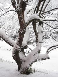 いつぞやの雪 - ギャラリーファブリル