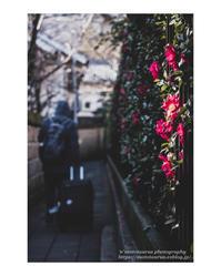 大寒 - ♉ mototaurus photography