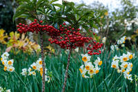 恵心院・冬の花々 - 花景色-K.W.C. PhotoBlog