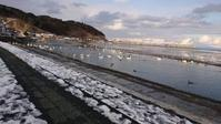 冬の来客 - 【日直田酒】 - 西田酒造店blog -