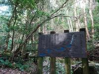 森林浴 - EVOLUTION