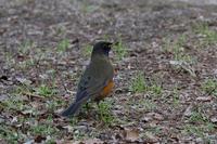 冬鳥のごく普通の・・・ - takiのカメラ散歩~☆