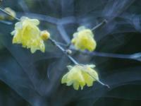 冬の大柿花山1 - 光の音色を聞きながら Ⅴ